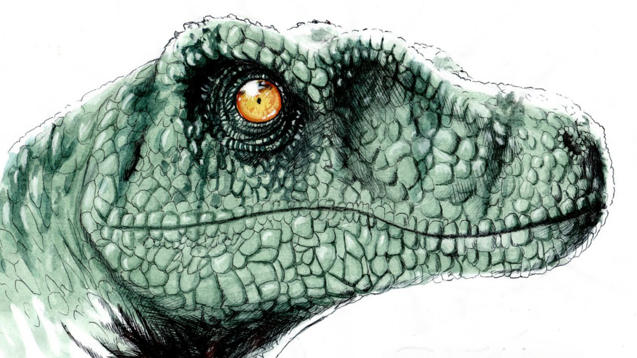 1280x720 How To Draw Velociraptor Disegno In Time Lapse Dinosaur