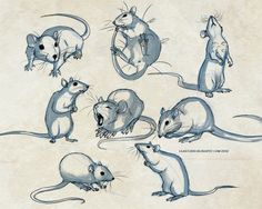 236x188 How To Draw A Rat Step 4 Art Rats, Drawings