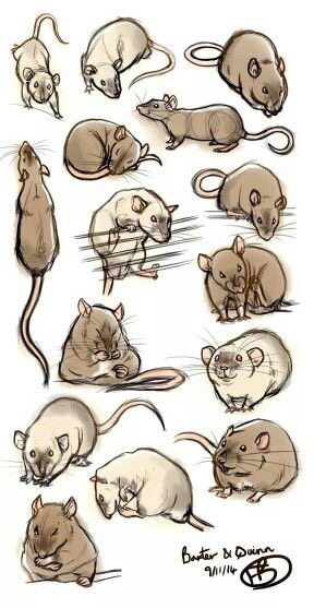 288x557 Rat Drawings Drawing Stuff