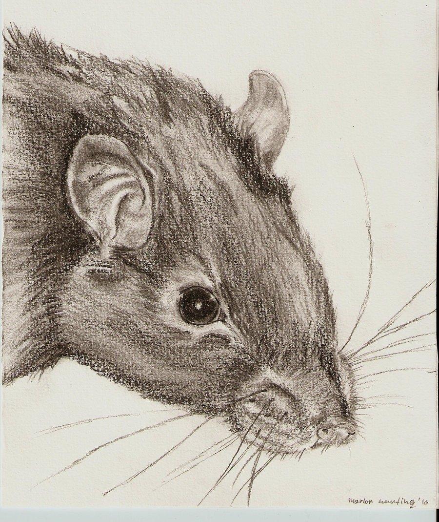 900x1069 Amazing Art Work With Rats