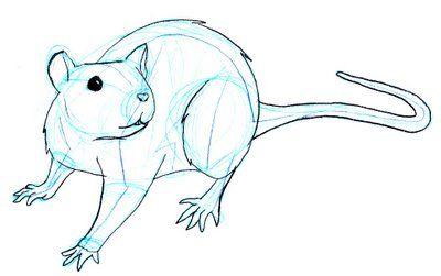 400x251 Rat drawing.jpg Animals Animal Drawings