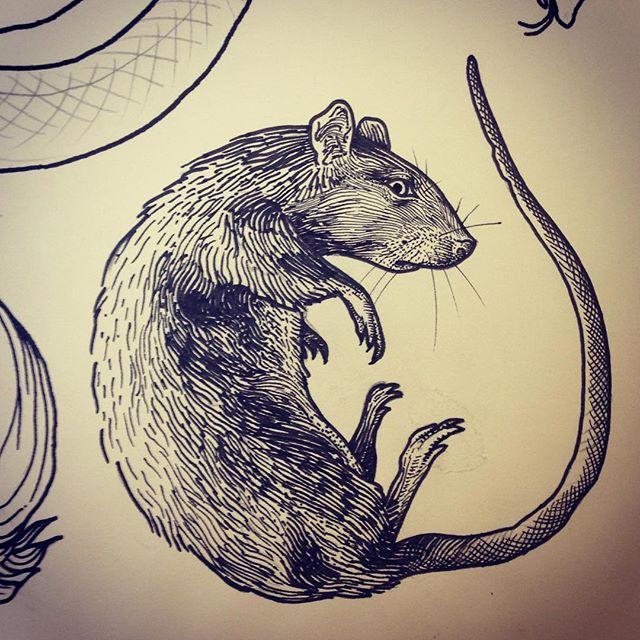 640x640 Rat Tattoo Art On Instagram Graffiti 02 Rat Tattoo