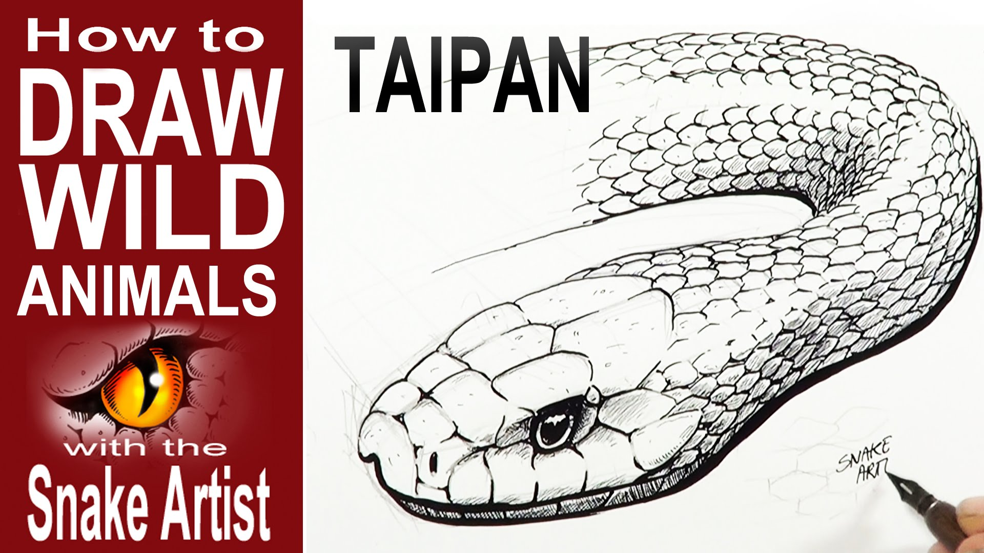1920x1080 How To Draw A Taipan (Intermediate To Advanced)