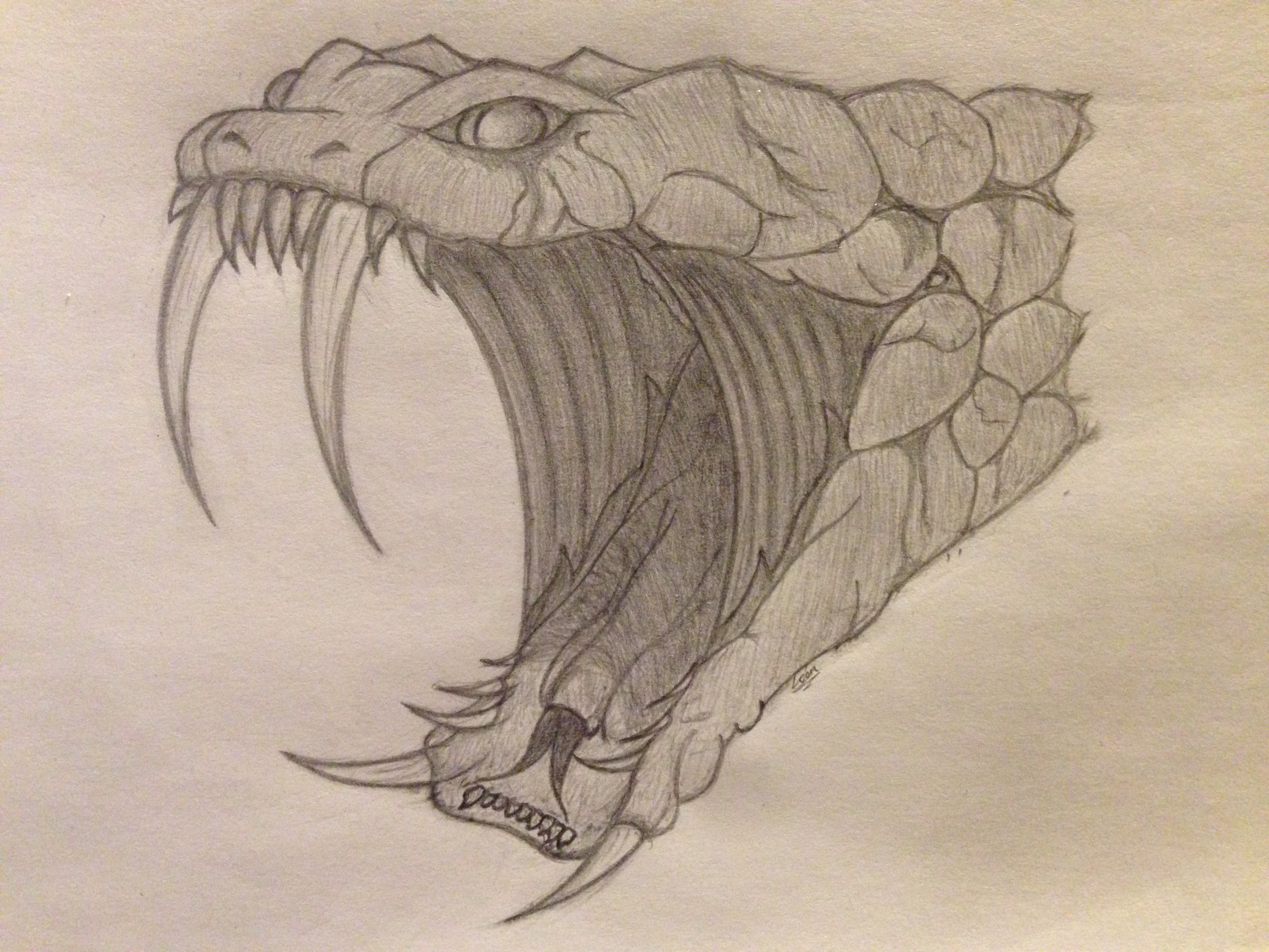 Rattlesnake Head Drawing At Getdrawings Com Free For Personal Use