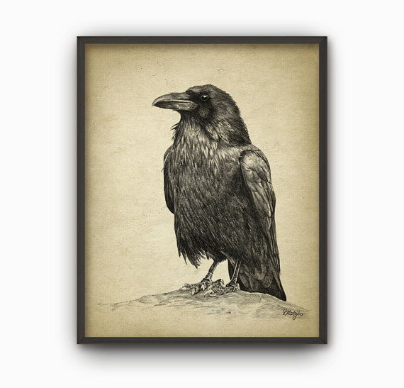 570x547 Raven Art Print Raven Pencil Drawing Print Raven Decor
