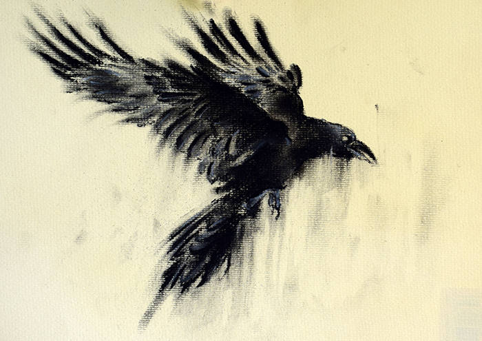 Raven Drawing on Pencil Drawings Free Online