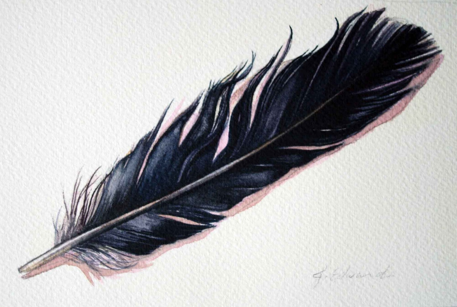 1500x1008 Crow Feather Drawing