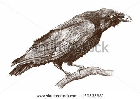 450x320 Raven Pencil Drawing Raven By Modera761101, Via Shutterstock