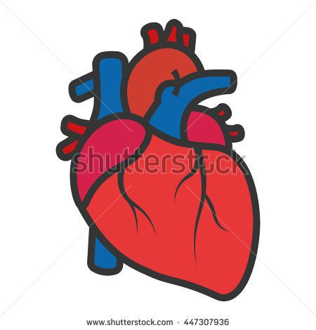 real heart drawing at getdrawings com free for personal use real rh getdrawings com real heart clipart black and white real human heart clipart