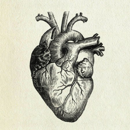 A Real Heart Drawing