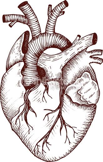 330x521 Arte Vectorial Anatomical Heart