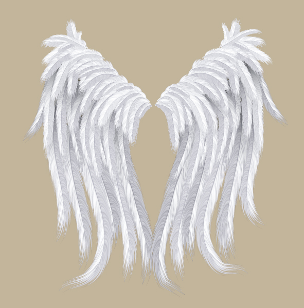 591x600 Create A Feather Brush And Set Of Detailed Wings In Illustrator