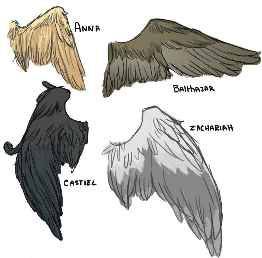 916x901 So I Might Be Going Through A Slight Wing Obsession