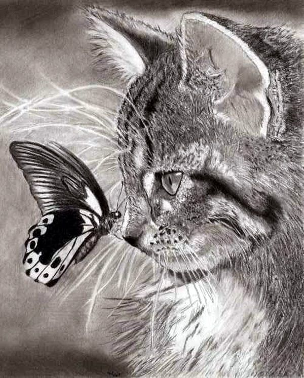 600x744 40 Realistic Animal Pencil Drawings Animal pencil drawings, Draw