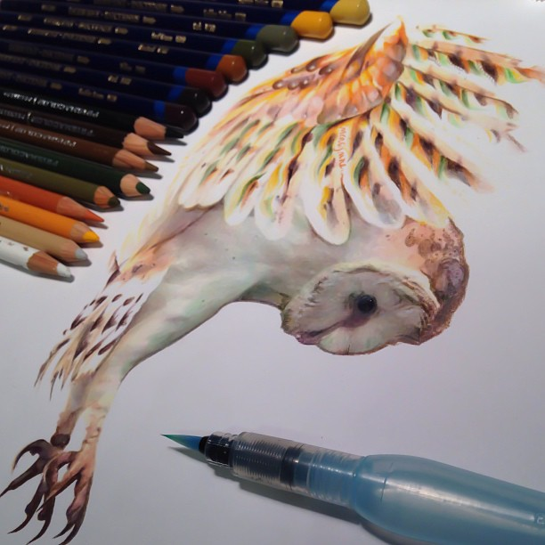 612x612 Realistic Animal Drawings Surrounded By The Tools Used To Create