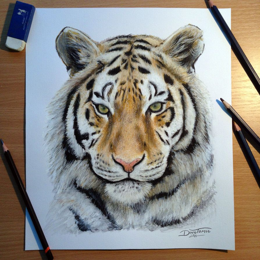 894x894 Tiger pencil drawing by AtomiccircuS on deviantART Draiwing