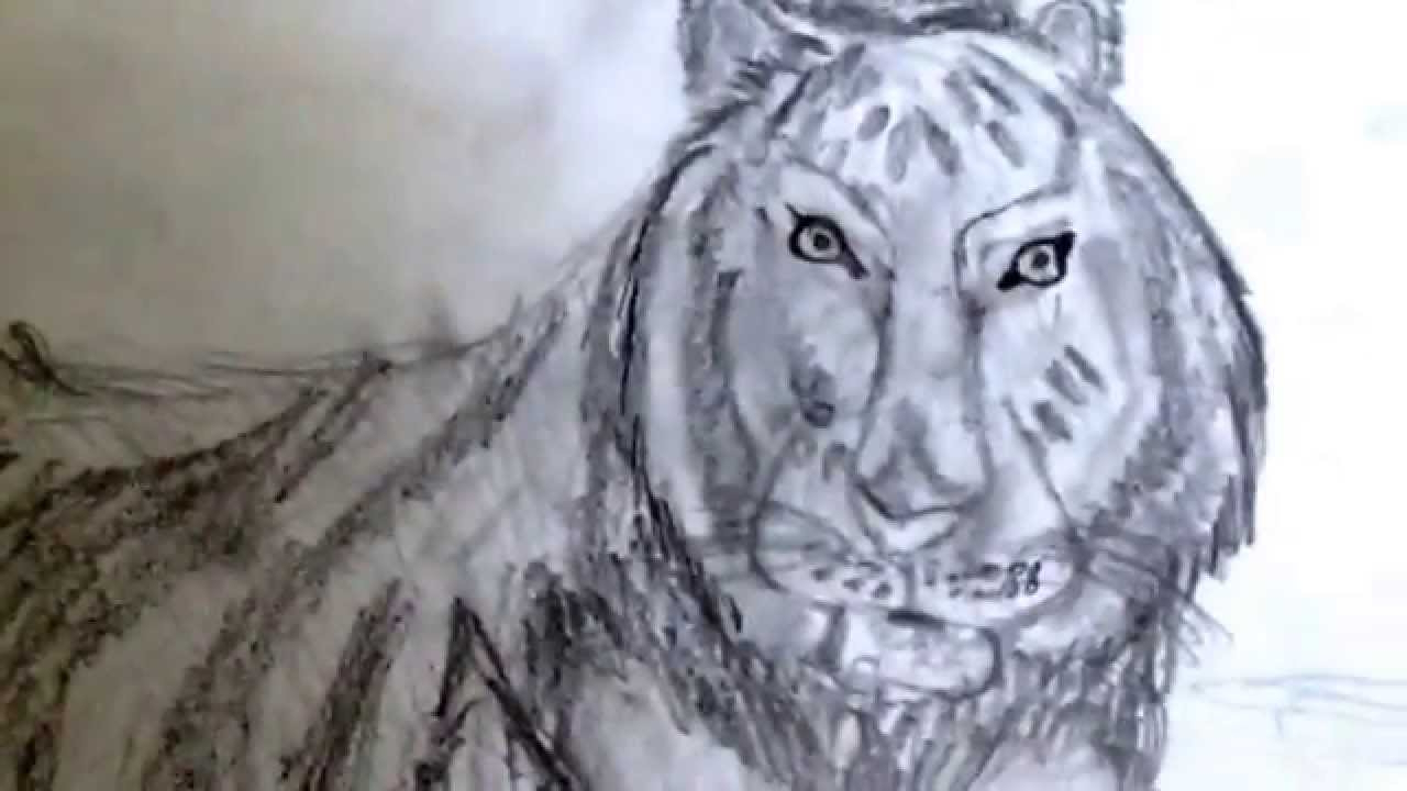 1280x720 Who To Draw A Real Animals My Realistic Animal Drawings