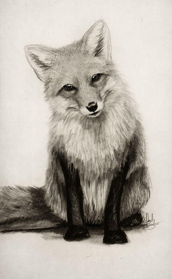 550x890 Gallery Real Animal Drawings,