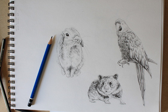 560x373 How To Draw Bunnies, Birds And Hamsters