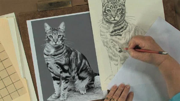 600x337 Keys To Drawing Realistic Animals