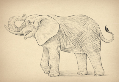 400x277 Pictures Easy Realistic Animals Drawing,