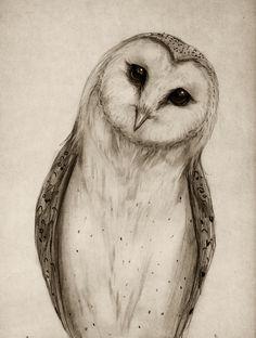 236x312 Barn Owl Sketch Art Print