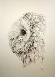 190x266 Image Result For How To Draw A Realistic Barn Owl Drawings