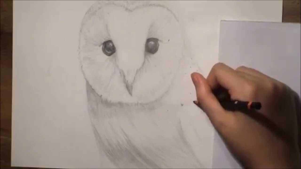 1280x720 Realistic Barn Owl Drawing