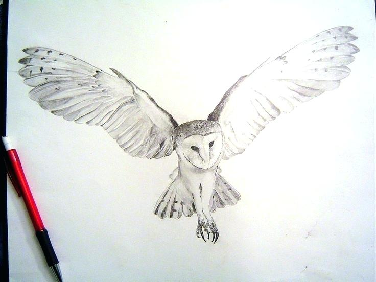 736x552 Realistic Owls Owl Drawings Barn Owl Tight Render By On Media