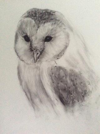 320x428 Snowy Owl Circa 10w