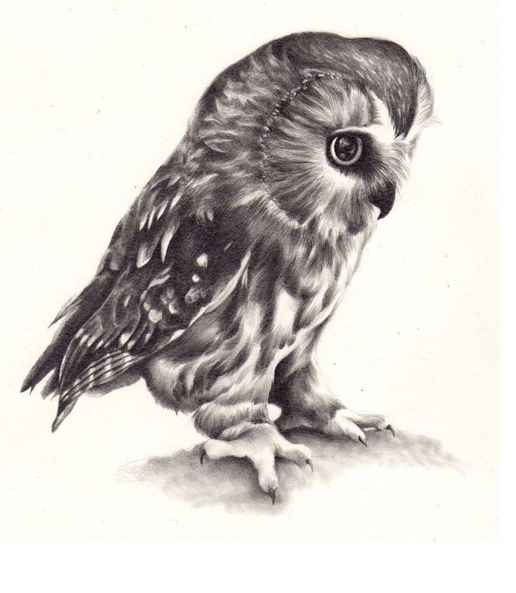 736x846 Tattoo Idea! My Brother Loves Owls! School Stuff