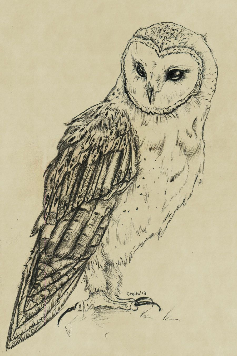 900x1350 Owl In Flight Drawing
