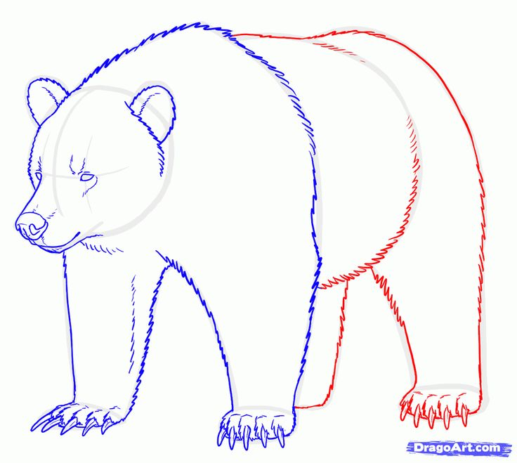736x659 94 Best Drawing Images On Sketches, Animal Drawings