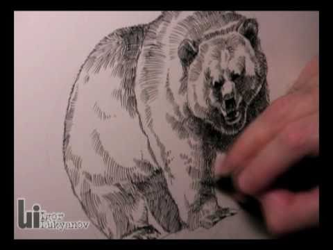 480x360 Drawing A Grizzly Bear (American Wildlife T Shirts Series)