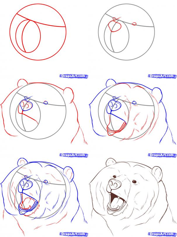 580x775 Easy To Draw Bear Standig This Entry Was Posted In How To Draw