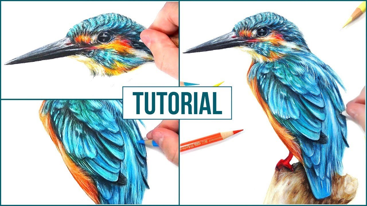 Realistic Bird Drawing At Getdrawings Com Free For