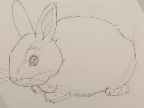 480x360 How To Draw A Baby Bunny