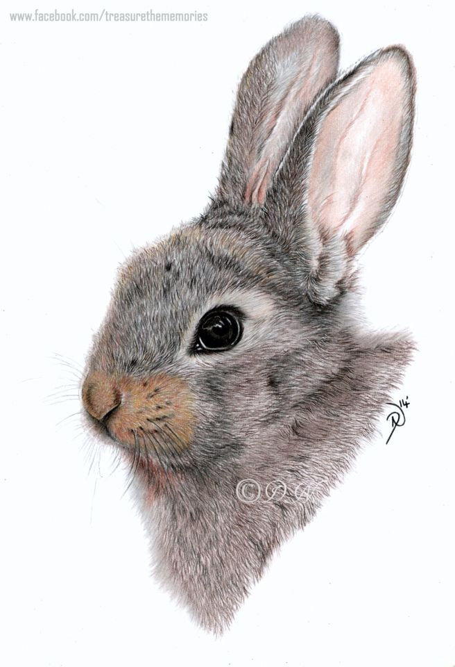 Realistic Bunny Drawing At Getdrawings Com Free For