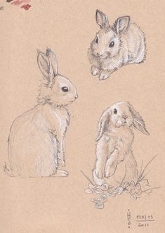 235x331 Rabbit Drawings
