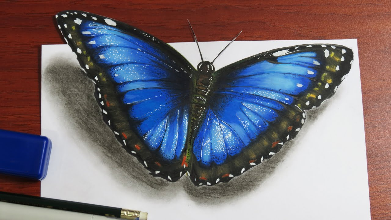 1280x720 Butterfly 3d Art Drawing How To Draw A Realistic Butterfly