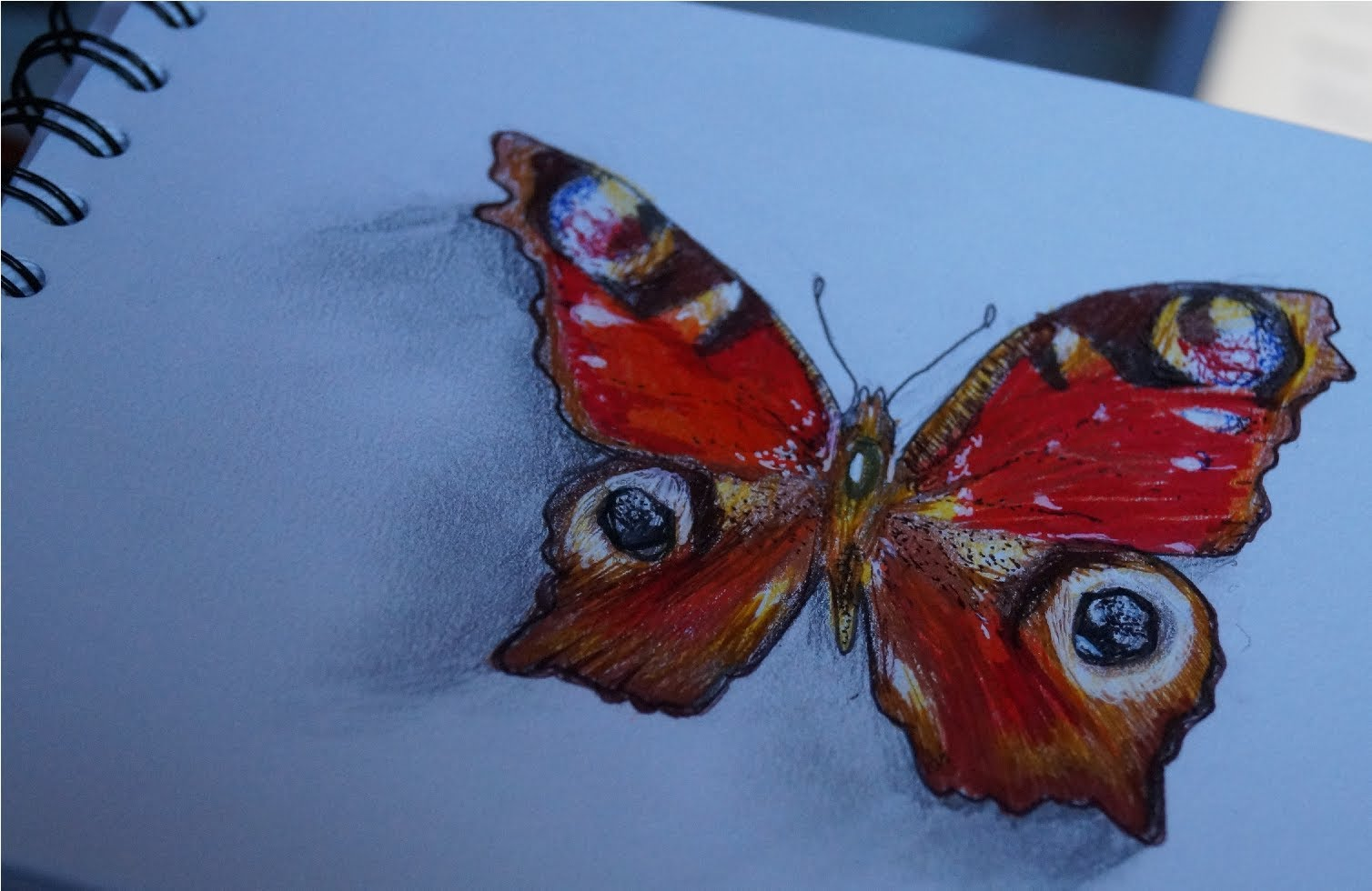1508x980 How To Draw A Realistic Butterfly