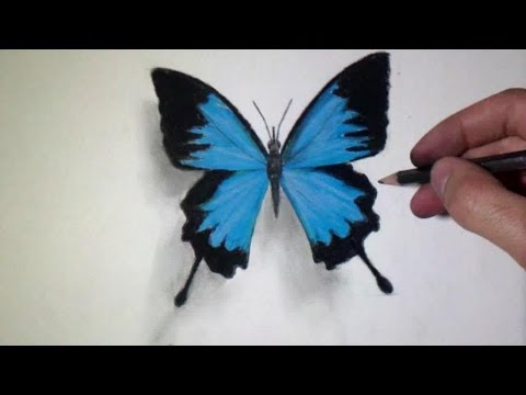 480x360 How To Draw A Realistic Butterfly
