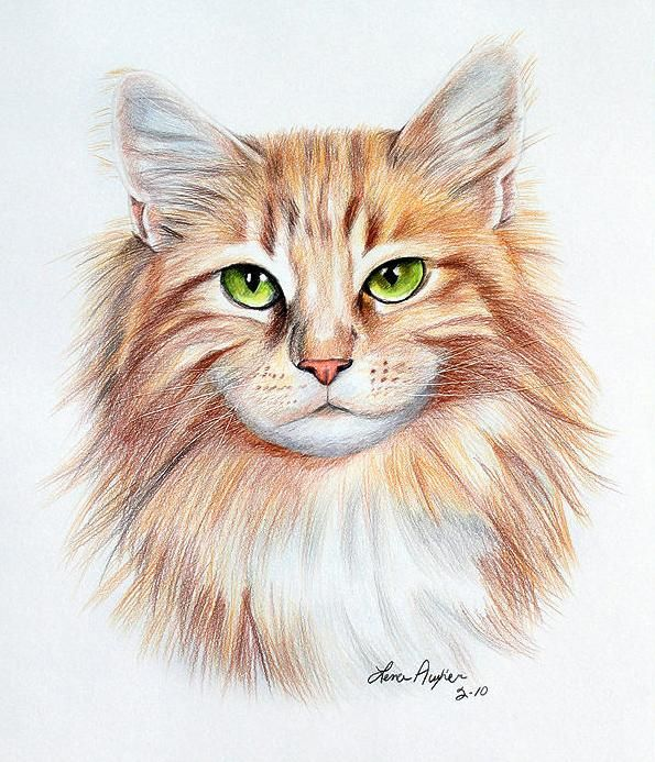 595x693 drawings of cats 25 beautiful cat drawings from top artists around