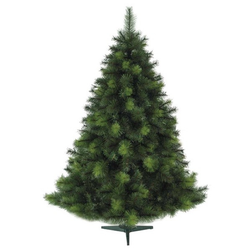 800x800 Realistic Christmas Tree Drawings Home Design And Decorating