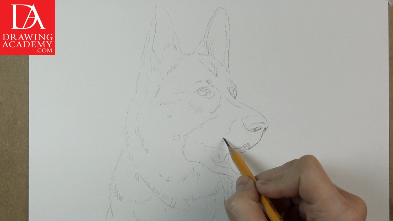 1280x720 How To Draw A Dog