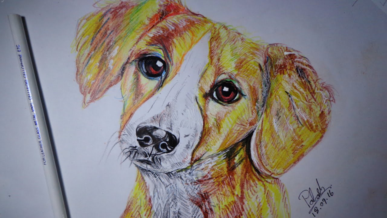 1280x720 How To Draw A Dog Draw A Wolf How To Draw A Realistic Dog