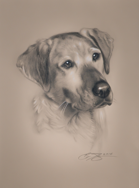 444x600 Realistic Dog Drawing By Golfiscool On Honden