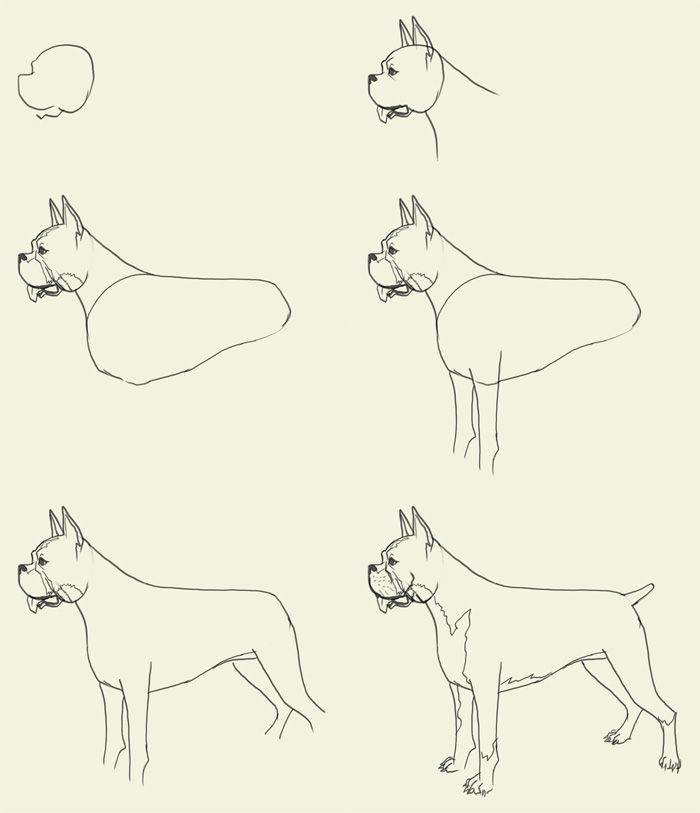 700x813 205 Best Dog Drawings Images On Dog Drawings