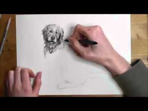 480x360 How To Draw A Realistic Dog Step By Step