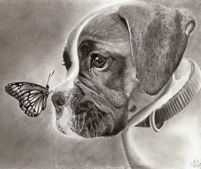671x562 Dog And Butterfly By On @ Drawing